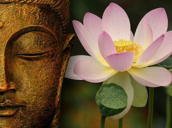 buddha-n-lotus-gregoire