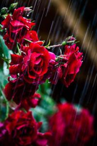 Drizzling Rain