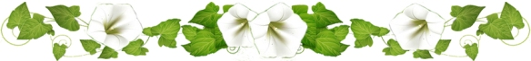 Frise fleur blanche 30